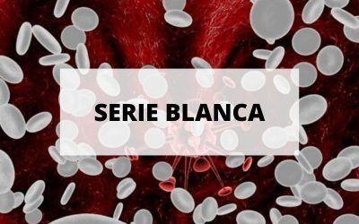 Todo sobre los glóbulos blancos, la serie blanca de las células de la sangre